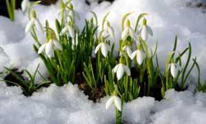 Растения весенних цветников виды и названия