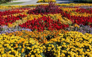 Идеи для осеннего цветника: какие растения лучше выбрать
